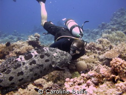 diver pretending kissing the cod ! by Caroline Baille